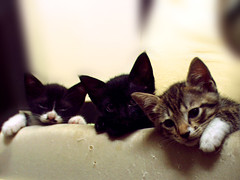 Just Chill'n (shutupyourface) Tags: boogie kittens babies 2004 leeloo gizmo kids bugger tigger tux