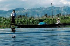 BRMAH (bocavermelha-l.b.) Tags: lake water fotolog myanmar inlelake inlelake legendaryfishermen inthapeople legrowers nikonf4 culturalsurvival inburma shootingwithnikonf4