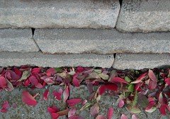 Grace (brainwise) Tags: border wall red gray stone leaf autumn mcdonalds