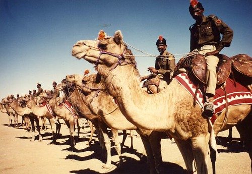 Photo a member of a camel