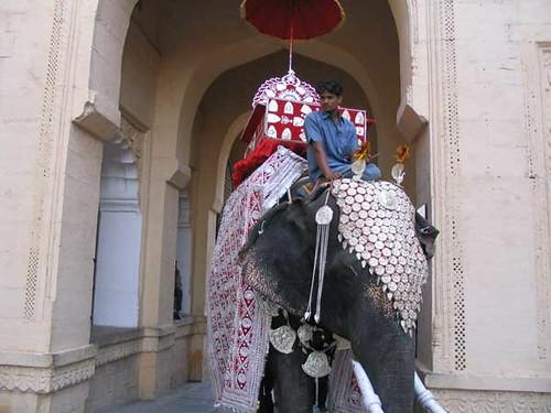 Elephant in regalia