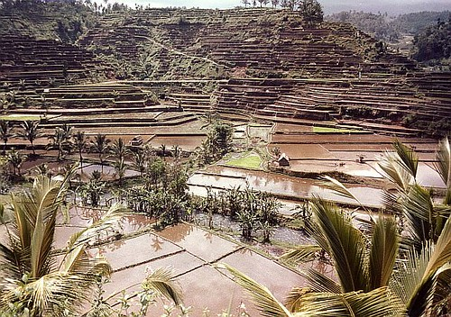indonesia bali ricefield 03