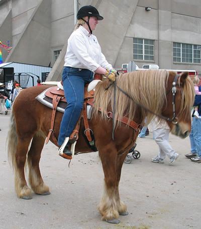 megapost!!! todas las razas de caballos