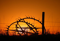 ...Sunset on the Plains... (Random Images from The Heartland) Tags: chris sunset sky southdakota topf50 topv555 topc50 bailey tricolor barbedwire prairie plains topf20 chrisbailey top20favview bail56 randomimagesfromtheheartland chrisbaileyimages