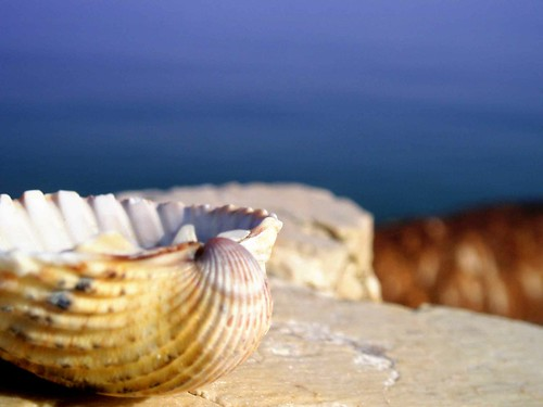 Conchiglia su scoglio 3 by Francesco Z, on Flickr