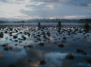 Reflections of Sierra daybreak