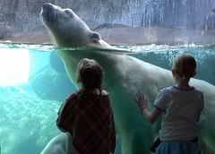 (jetrotz) Tags: zoo screensaver rochester polarbear senecaparkzoo