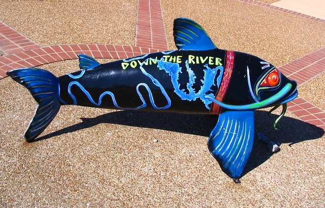 Cumberland River Catfish