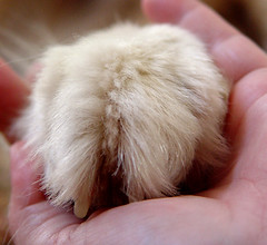 HoldingHands (Haggis) Tags: snug hand paw hold holding hands
