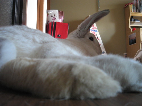 BIG FOOT!