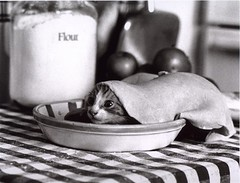cat in pie (Bicherele) Tags: cat pie bw 500v50f