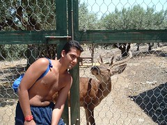 Give me a Kiss (Haldir) Tags: deer etnaland kiss cage peppe