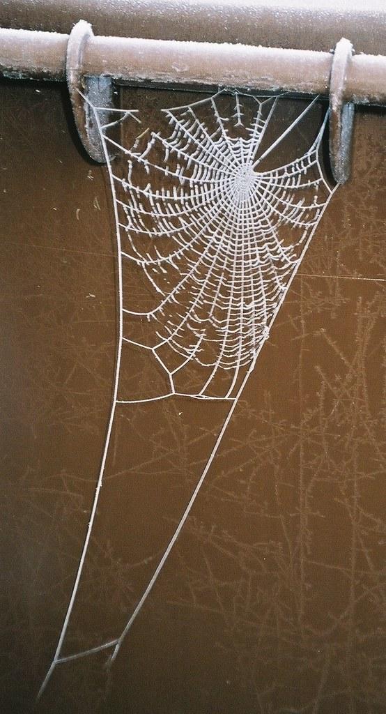 Wintry Web