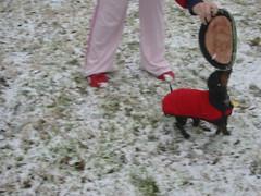 IMG_3732 (CourtneyPo) Tags: dogs snow dachshund greatdane napoleon