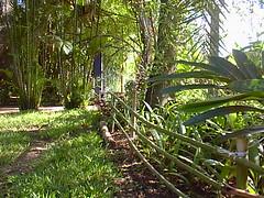 PIC00007 (joaobambu) Tags: 1998 chacara brazil brasil echapor echapora