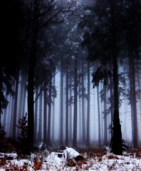 In the wood of the fairies (Cilest) Tags: tree nature fog wow landscape bravo cilest cloudy kurt misc topc50 natur foggy landschaft wald idylle wolkig