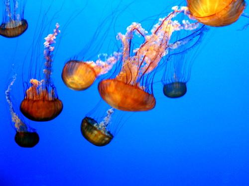 fische größtes Ozeanarium Welt