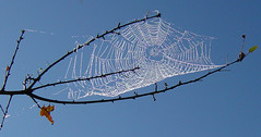 Spider web against sky September 28 03