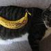 Return of the Spotty Banana