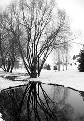 reflected tree (charmar) Tags: winter blackandwhite bw snow reflection tree nature water outdoors blackwhite pond moscow arboretum idaho universityofidaho bandw uofi