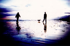 sun set beach #12 (lomokev) Tags: sunset sky people dog black reflection beach silhouette lomo xpro crossprocessed xprocess sand brighton purple lomolca agfa jessops100asaslidefilm agfaprecisa agfaprecisa100 cruzando precisa  deletetag jessopsslidefilm file:name=bgen1611