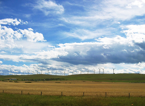alberta summer landscape