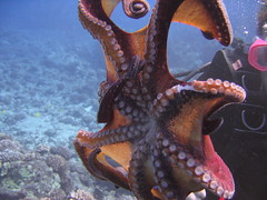 Octopus fanned-out - by ccaviness