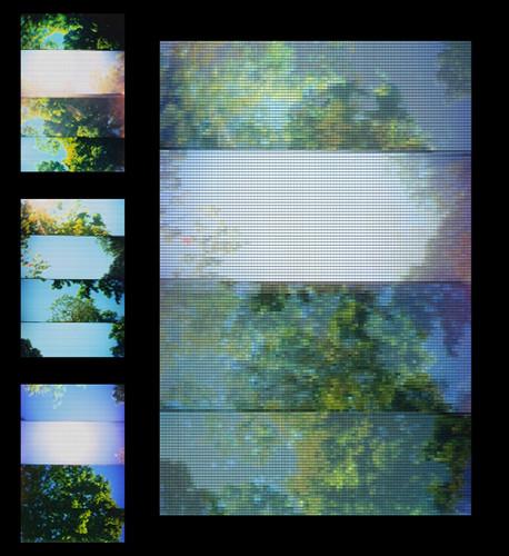 bushes & sky