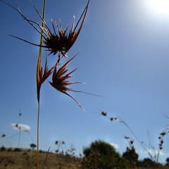 summer (justinknol) Tags: 2005 blue sky plants sun australia ixus canberra pc2607 torrens justinknol