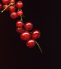 currants (particle-wave) Tags: food scannerphotography currants