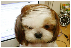 Donald Trump's Dog