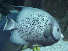 Caesars aquarium4 - by mharrsch