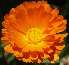 Flowers 7 (JRR) Tags: flowers homestead ranchoroberts