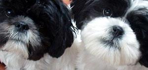 Leo & Gus