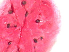 Melon (Special) Tags: unfound food pink seeds fruit watermelon stock crapcam