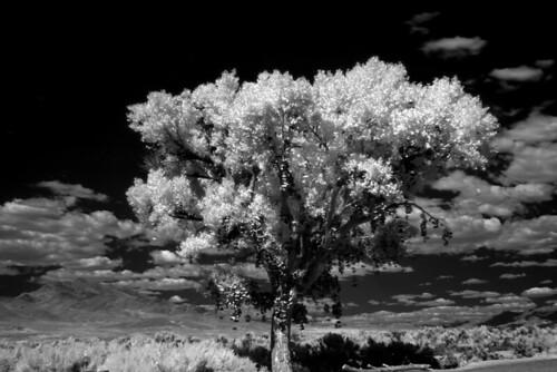 titdilapa  shoe tree nevada