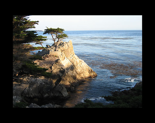 The Lone Cypress by bro0ke