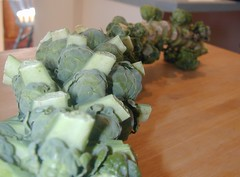 brussel sprout stalk