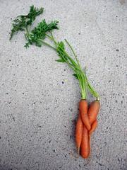 Carrots in Love