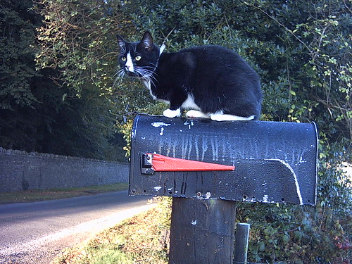 Beemer on the mailbox
