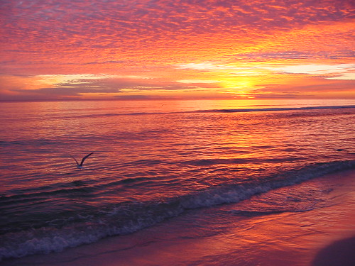 bird at sunset on beach by tim goodenough