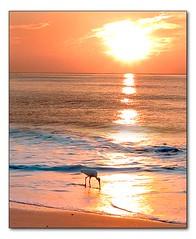 Ibis at Sunrise (hodad66) Tags: bird water animal 510fav florida wave animalkingdomelite