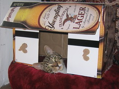 cathack (finn) Tags: cat yuengling lifehacks lifehack catinabox cathack catbedhack