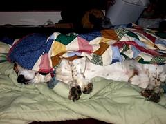 Bacon in a Blanket