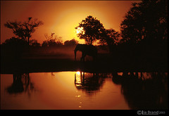 GET ME TO THE WILDERNESS (bocavermelha-l.b.) Tags: film zimbabwe f5 reflexos nikonf5 fullframe wildlifephotography makalolo hwangenationalpark waterpan wildlifeafrica elephantreflection shootingwithnikonf5 inzimbabwe magicsundowner