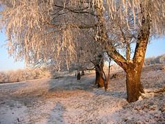Very early morning (:Linda:) Tags: germany thuringia landscape village winter hoarfrost morning tree sky bürden frost hildburghausen baum raureif rauhreif