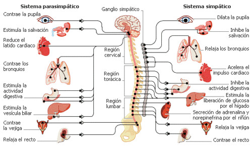 Los diferentes tipos de sistemas, nervioso, respiratorio,etc