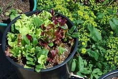 GreensandPurples_1858-full (Ranj Niere) Tags: floraandfauna may05