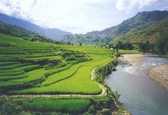 rice paddy (birdcage) Tags: vietnam sapa rice paddy stream valley green mountains stepped pentaxk1000