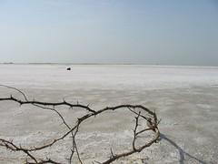 Brackish wasteland (Uma~) Tags: uma thorn salt desert